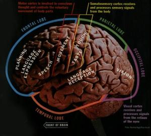Time.Brain